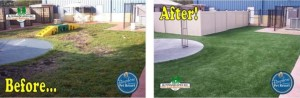 Before and After Bayshore Groom and Pet Resort