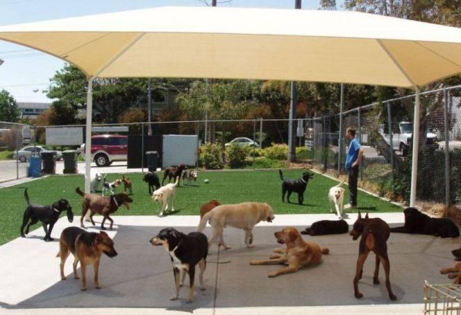 Uptown Dog Grooming Winter Park