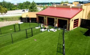 Dog Care Facility with FieldTurf Grass. Happy Dogs = Happy Clients.