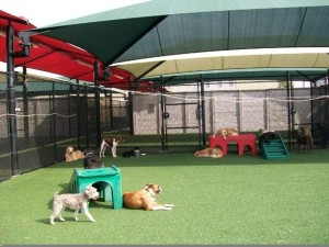 FieldTurf Artificial Grass for Dog Boarding, Doggy Day Care, Pet Hotels and More!