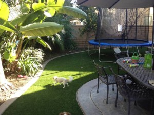 Combination area for our FieldTurf Artificial Grass being used for Pet Dogs and Children's Play Area