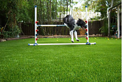 Siesta Key Residential Dog Runs always look nice with EasyTurf fake lawn and artificial turf