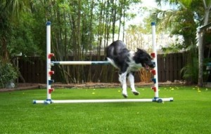 We install Dog Agility Fields with FieldTurf Artifiicial Grass for training at homes and businesses.