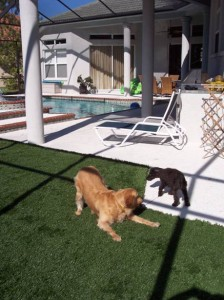 FieldTurf Synthetic Lawn near the Pool Deck is ideal for kids, pets and impervious to pool water and most chemicals.