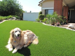 Every Dog has his day, and yours should be on FieldTurf Artificial Grass for maximum clean and allergy free fun.