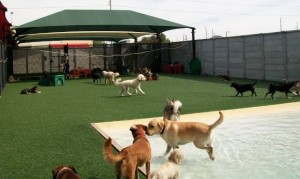 FieldTurf Synthetic grass for dog and pet hotel businesses.