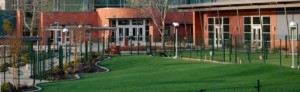 Human Societies, Animal Shelters, and Doggy Daycares use FieldTurf artificial grass