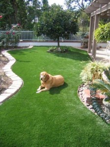Lucky dog at home on FieldTurf artificial grass. Feels real, looks real, and designed for pet use. Awesomely drains, with no stains... Just green and clean.
