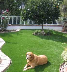 Residential FieldTurf hypoallergenic grass for pet dogs