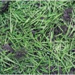 Recycling EasyTurf Synthetic Grass