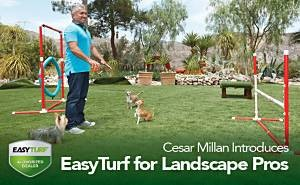 Cesar Millan introduces EasyTurf Synthetic Turf for Florida Landscape Pros