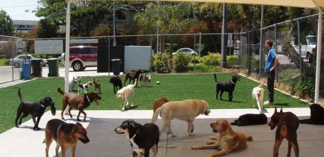 Florida Commercial Dog Care Facility with EasyTurf Artificial Grass. Always Clean, and Always Green.