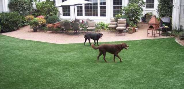 Florida Residential Artificial Grass and Synthetic Lawn for Dogs and Pets
